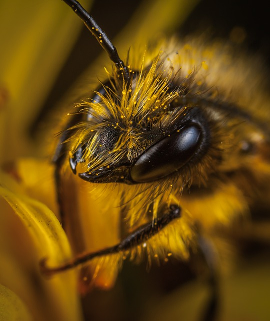 What Can Bee Propolis Do For You? | Natures Naturals